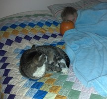 Little Aaron, Belle Kitty and the quilt