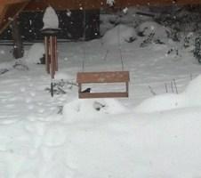 One lone bird in the feeder