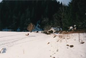 Aaron_Blackie_Wilderness Home