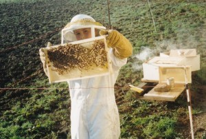 Aaron_checking bee hive (800x540)