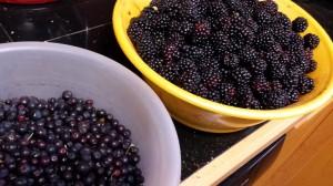 Berry Gathering