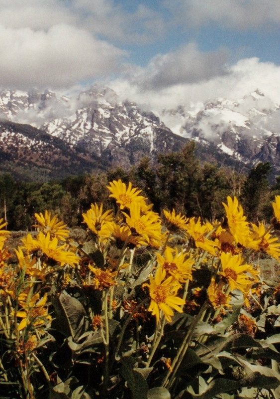 national_park_flowers_and_mountains