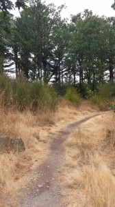 Blackberry Beach Trail, Cascade Locks, Oregon